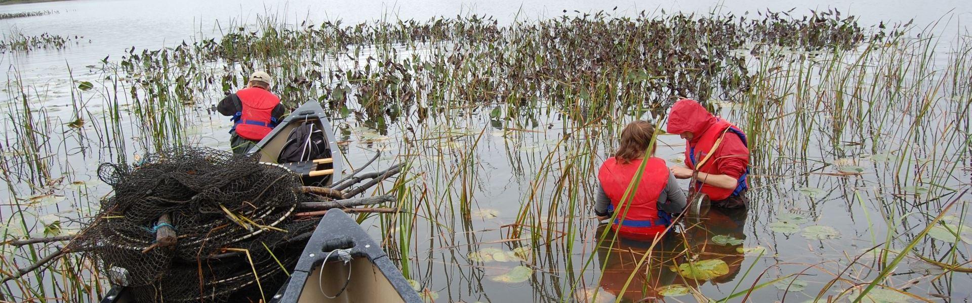 Étudiants en techniques de bioécologie procédant à l'identification d'espèces de la faune et de la flore dans un marais