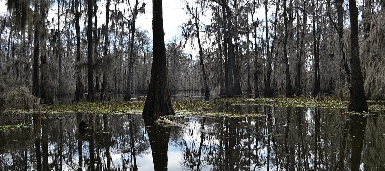 Visiter la Louisiane, c'est aussi possible pour les étudiants des options Médias et littérature.