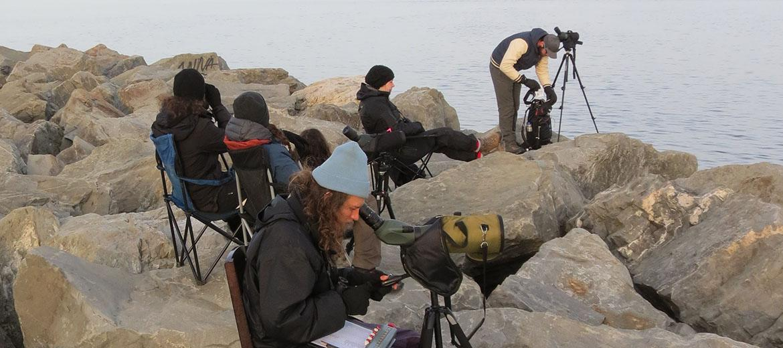 Observation d'oiseaux marins en migration sur le fleuve