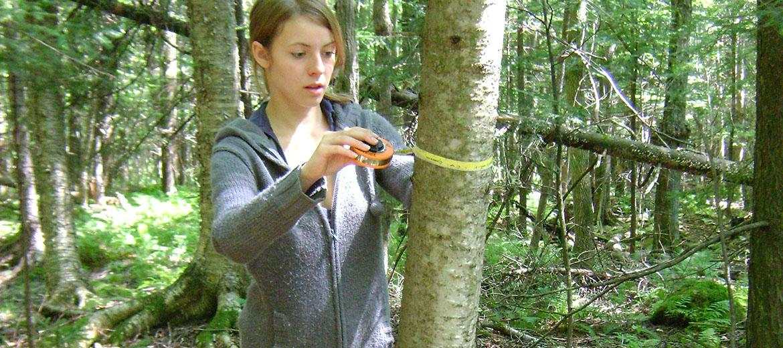 Mesure du diamètre à hauteur de poitrine d'un arbre à l'aide d'un gallon circonférentiel
