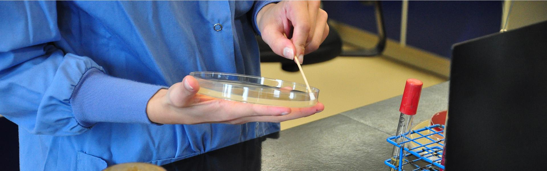 Ensemencement d'un antibiogramme en microbiologie